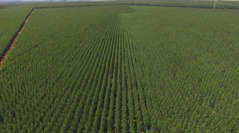 Com licença ambiental aprovada, multinacional de celulose tem obras autorizadas no Triângulo Mineiro