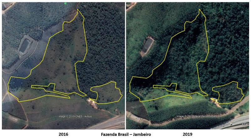 Projeto Tamoios de Plantio abrange 243 hectares de proteção de nascentes e restauração de Mata Atlântica